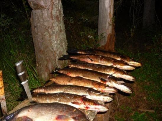 рыболовные туры в архангельской области