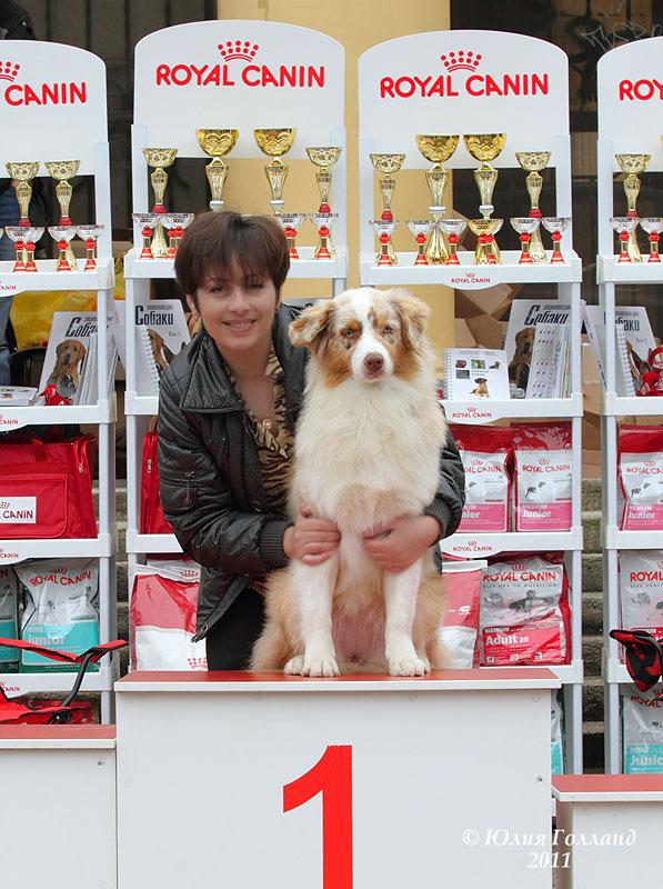 Выставочные успехи наших собак - 2 - Страница 6 205407--43478606--u96bc6