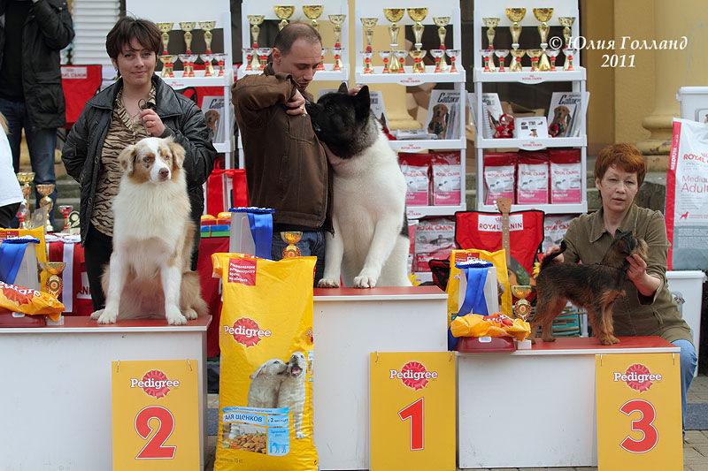 Выставочные успехи наших собак - 2 - Страница 6 205407--43478610--u7e9de