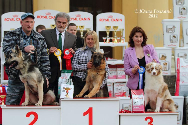 Выставочные успехи наших собак - 2 - Страница 6 205407--43478632-m750x740-u7f14a
