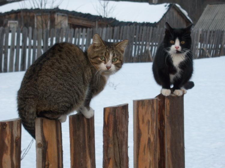 Про кошек - Страница 3 89192--43251737-m750x740-ud38c3