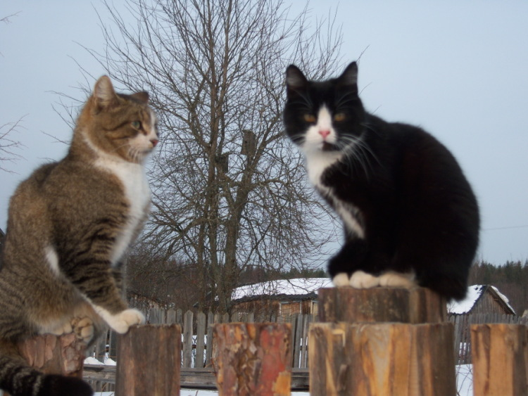 Про кошек - Страница 3 89192--43251768-m750x740-uf16fa
