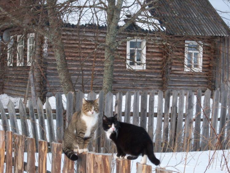 Про кошек - Страница 3 89192--43251833-m750x740-ua942a