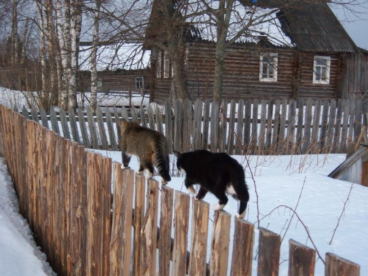 Про кошек - Страница 3 89192--43251842-m750x740-ua4189