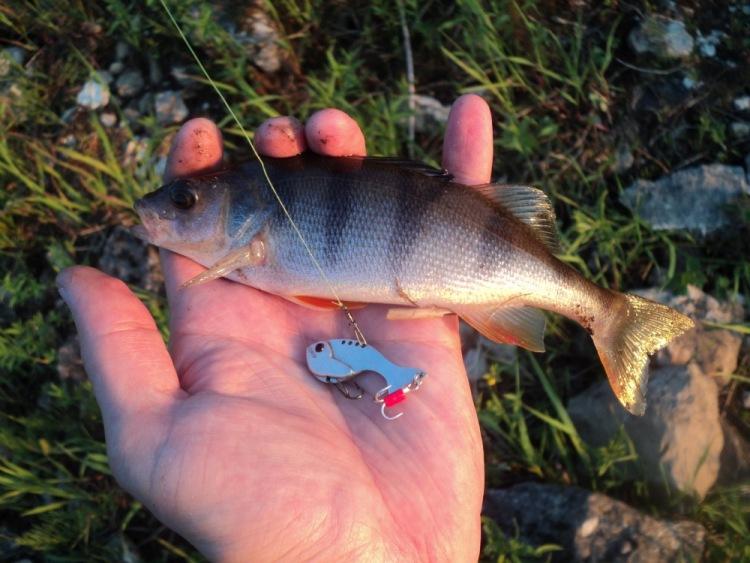 ловля рыбы на цикаду летом